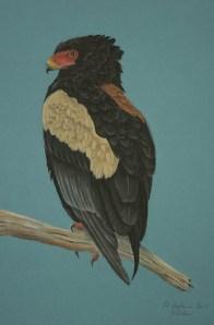 Lukisan-lukisan burung karya Ed Aylmer