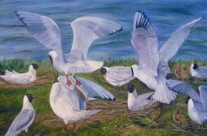 Lukisan-lukisan burung karya Lynn Gould