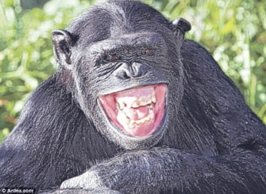 Monyet tertawa