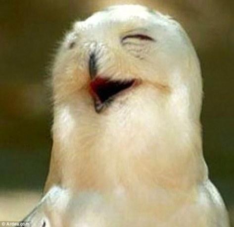 Oh burung hantu ini nyengir kegirangan