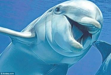 Si luma-lumba berwajah gembira